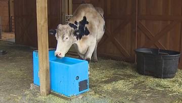 Monroe animal sanctuary faces water shortage