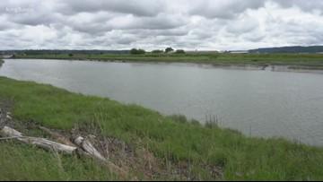 Chinook habitat restoration on Stillaguamish River to start in July