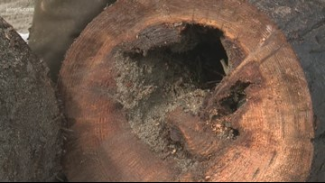 Puget Sound toxic wood removal could take 10 years without more funding