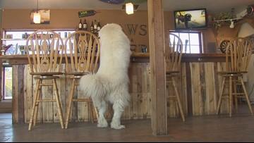 Bark for your beer in Bellingham