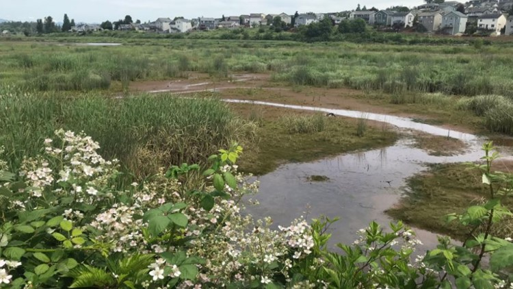 Snohomish River estuary project an example of why salmon recovery takes so long