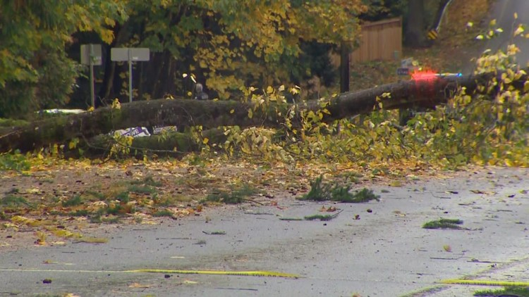 Downed trees a major problem across Issaquah
