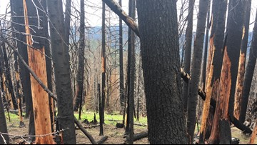 Science behind Western Washington wildfires and how climate change may play a role