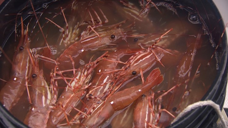 Try catching your own shrimp in the San Juan Islands