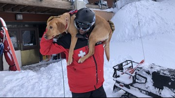 Search dogs helped find victims buried in snow after Silver Mountain avalanche