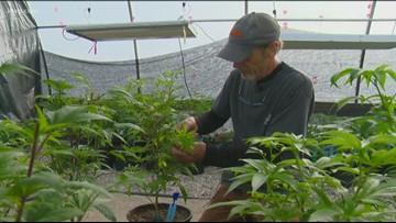 Oregon lawmakers move to prepare for interstate pot commerce
