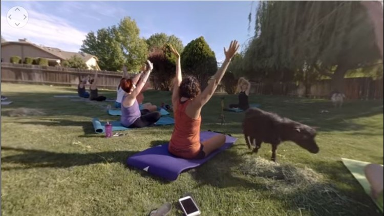208 Redial: Goat yoga stretches into Treasure Valley, now on social media
