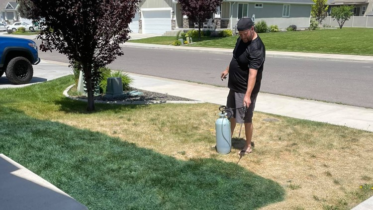 Fed up with a dead and yellow lawn, couple paints their grass green