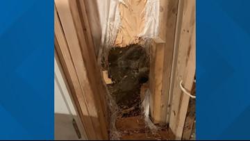 Bear breaks into Colorado house, leaves 'like the Kool-Aid Man'