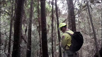 Firefighters Attempt to Save Prehistoric Trees From Australia's Wildfires