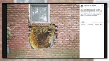 Holy honeycomb! Beekeepers remove massive honeycomb from behind brick on house