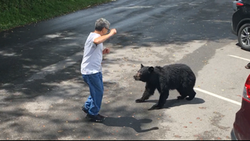 WATCH: Bear swipes at Tennessee park visitor who approached her cubs
