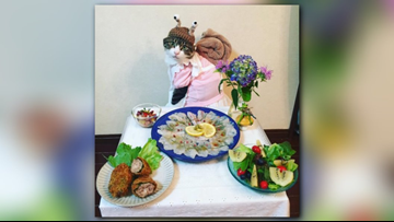 Cat dresses in meow-nificent outfits for dinner date with mom