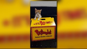 Have cat will travel: Bojangles comes to the rescue when shelter runs out of boxes