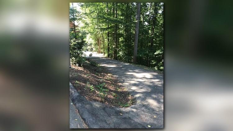 bear in driveway 2 crop_1535579315173.jpg.jpg