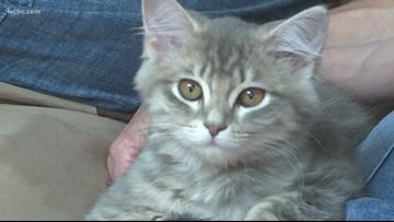'It's spot on!' | North Carolina family successfully clones pet cat
