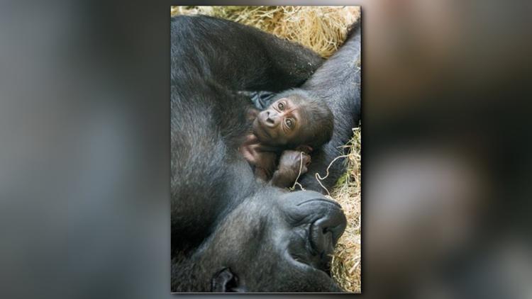 (Photo courtesy of the Philadelphia Zoo)