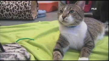 Declawing of cats banned in New York