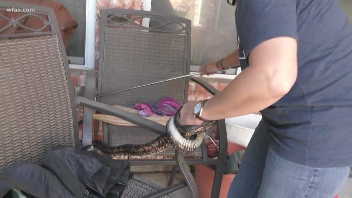 If you have snakes in your backyard, this Collin County group may be