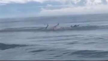 Sharks seen jumping out of water, feeding on fish at Myrtle Beach