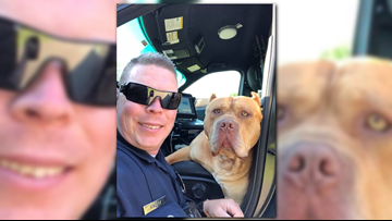 Police officer gets a nice surprise after responding to call about a 'vicious' pit bull