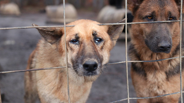 165 German Shepherds found living in 'extremely neglectful conditions' in Georgia