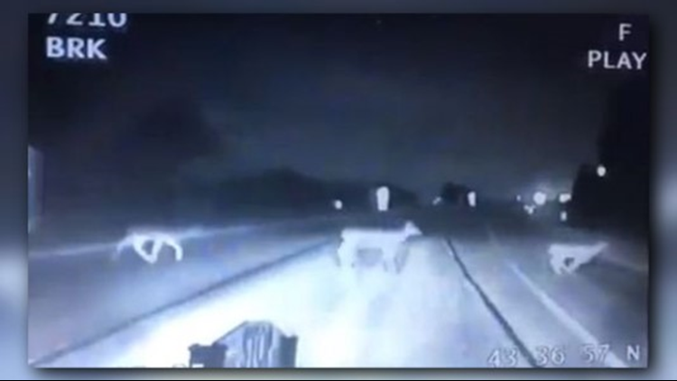 Michigan State Police trooper nearly collides with group of deer crossing road